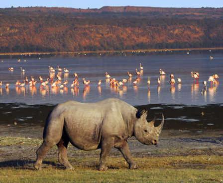 Visit to Lake Nakuru