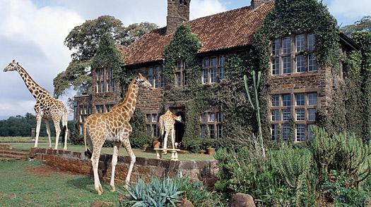 Visit to Langata Giraffe Centre