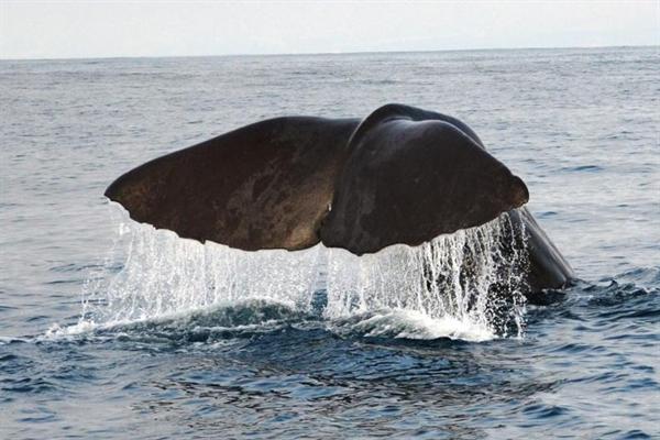 Whale watching tour Kaikoura