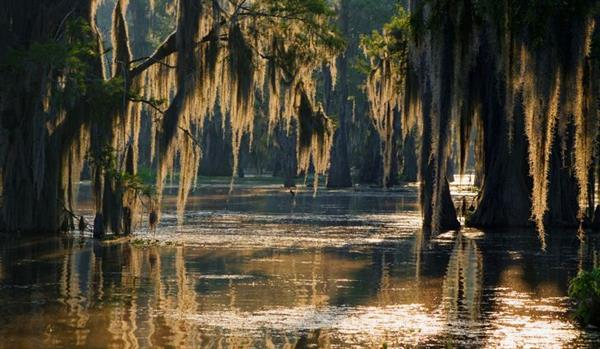 Swamp and Bayou Boat Tour