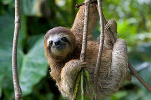 Shaun and Briony - Honeymoon registry Costa Rica