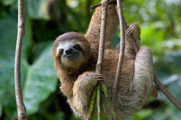 Sloth Experience and Cultural Towns Half-Day Trip from San Jose