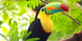 Wildlife Safari Float Trip and Natural History Tour