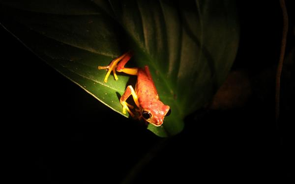 Night Tour in Monteverde