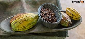 Rainforest Chocolate Tour from La Fortuna