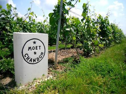 Champagne region wine tour