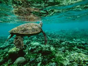 Help us to Honeymoon - Honeymoon registry Great Barrier Reef or The South Pacific