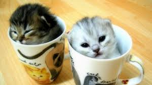 Tea with kittens, London