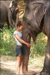 Full Day Experience at the Elephant Refuge - Thailand