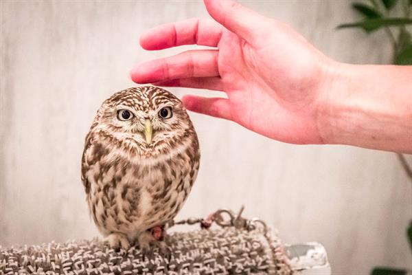 Owl Cafe - Akiba Fukurou