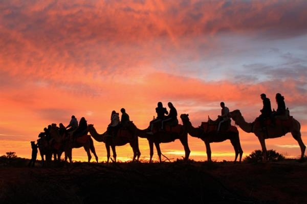 Central Australia - Uluru - camel tour