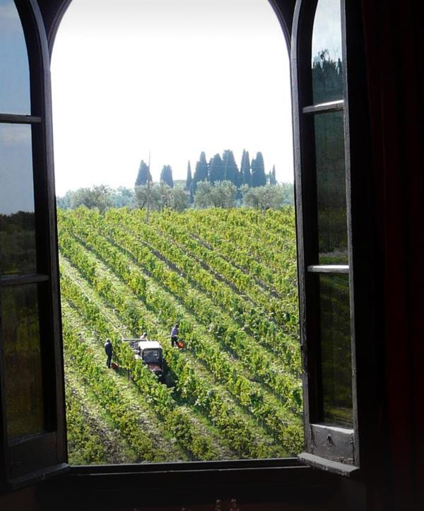 A real Tuscan wine experience