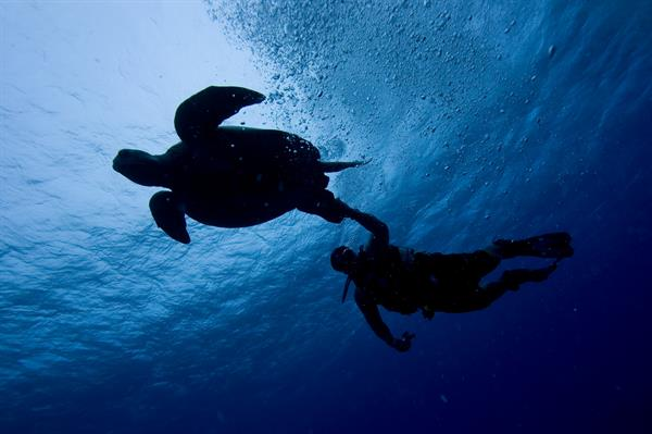 Scuba Diving with Giant Turtles