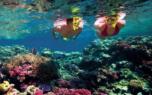 Snorkelling Fiji (1 person)