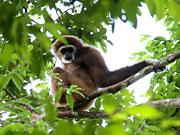 3 day jungle eco-hike