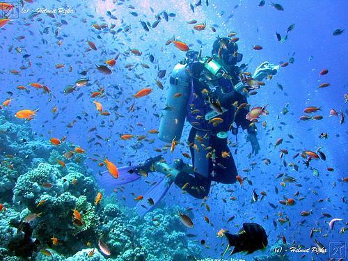 Scuba Diving: Dive 3