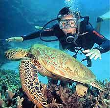 Scuba Diving: Dive 4