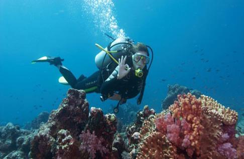 Scuba Diving: Dive 5