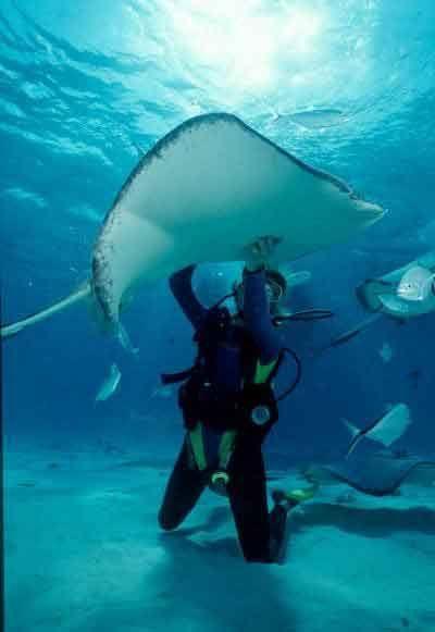 Scuba Diving: Dive 7
