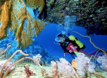 Scuba Diving: Dive 8
