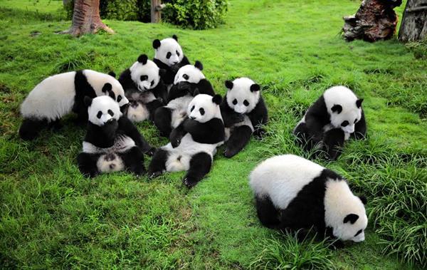 See the pandas