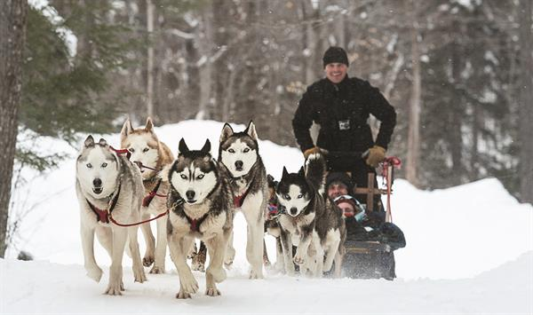 1 Dogsledding tour